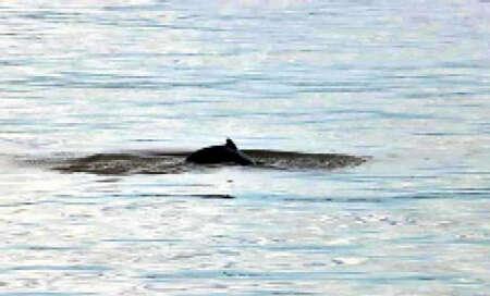 因电击捕鱼造成江豚死亡事件将严厉追究