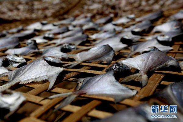 隔着屏幕都能闻到海鲜味 缅甸渔民晾晒鱼干