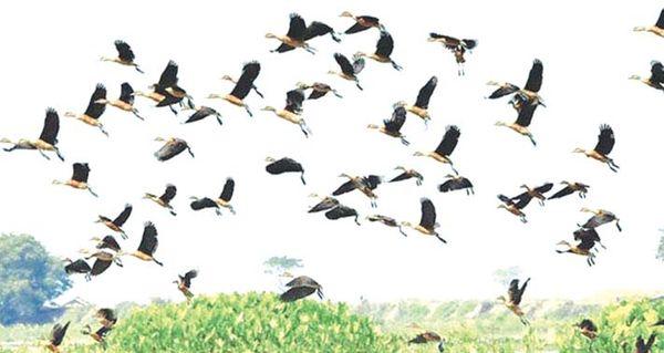 鸟类资源丰富的莫允基湖