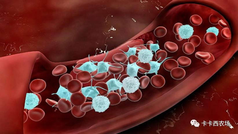 德国医学专家:所有新冠病毒疫苗均可导致严重后果