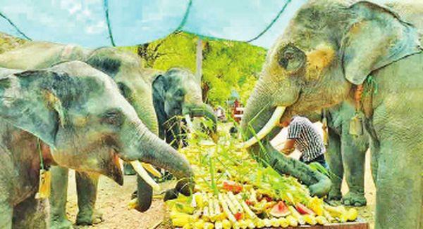 曼德勒省良吴县区伯林大象营地获得热心人士们的大力赞助