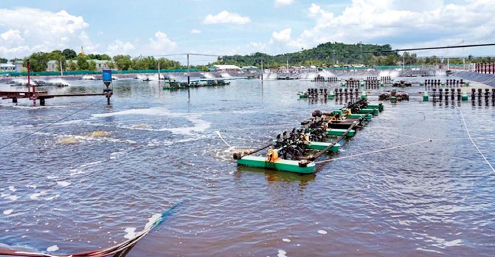 缅甸水产品活虾活螃蟹等在航空线重新启动后有望恢复出口