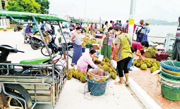 德林达依省区榴莲水果虽歉收但价钱上扬果农们收益良多