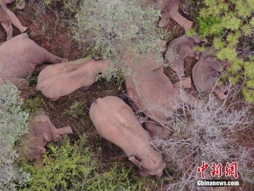 独家丨陈飞:如何理性科学看待亚洲象北迁的中国样本?