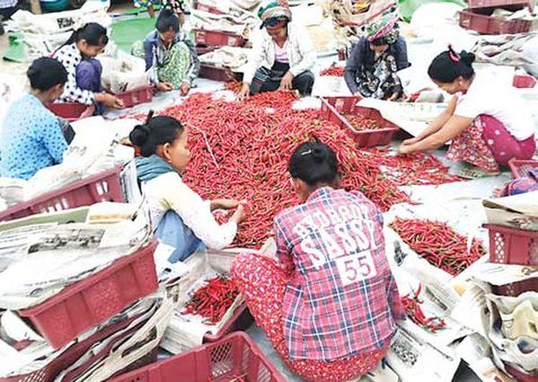 七月份内缅甸国内辣椒市场行情不稳定