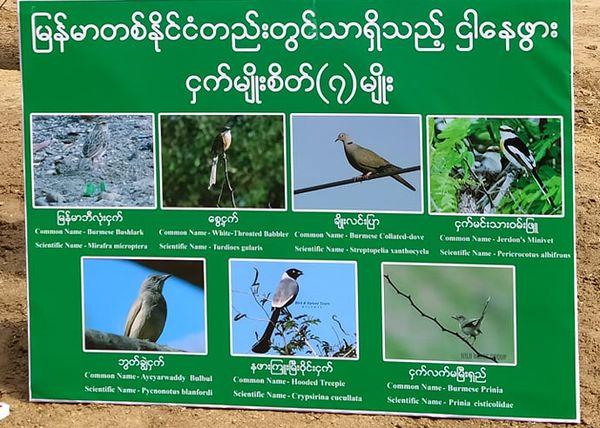 蒲甘古文化区旁边的保护林园中栖息着7种缅甸本土珍稀鸟类